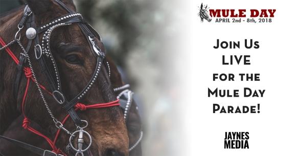 Mule Day 1